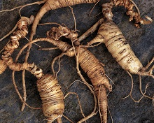 6 Things to Know about American Ginseng
